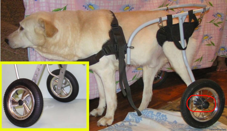 серьезных загрязнениях как изготовить коляску тележку для собак кошек выбора термобелья