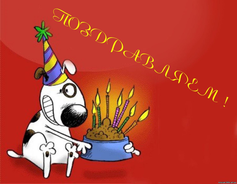 День ветеринара 2018 дата праздника, история, поздравления 41